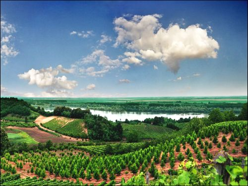 Fruška Gora- vinogradi
